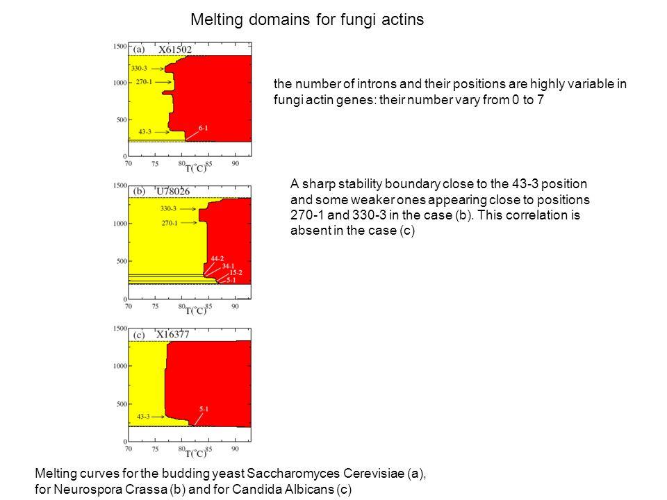 Melting domains for fungi actins