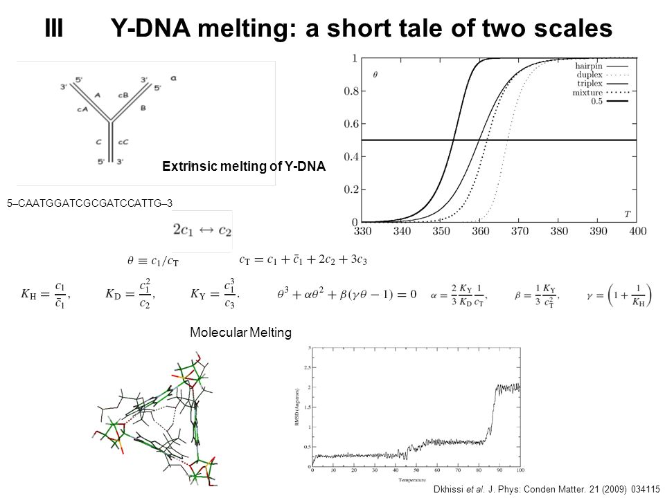 III Y-DNA melting: a short tale of two scales