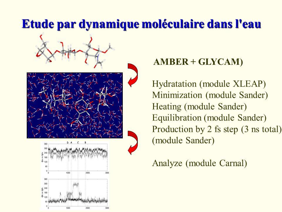 Etude par dynamique moléculaire dans l eau