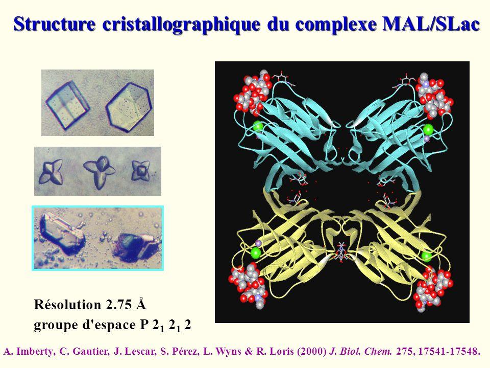 Structure cristallographique du complexe MAL/SLac