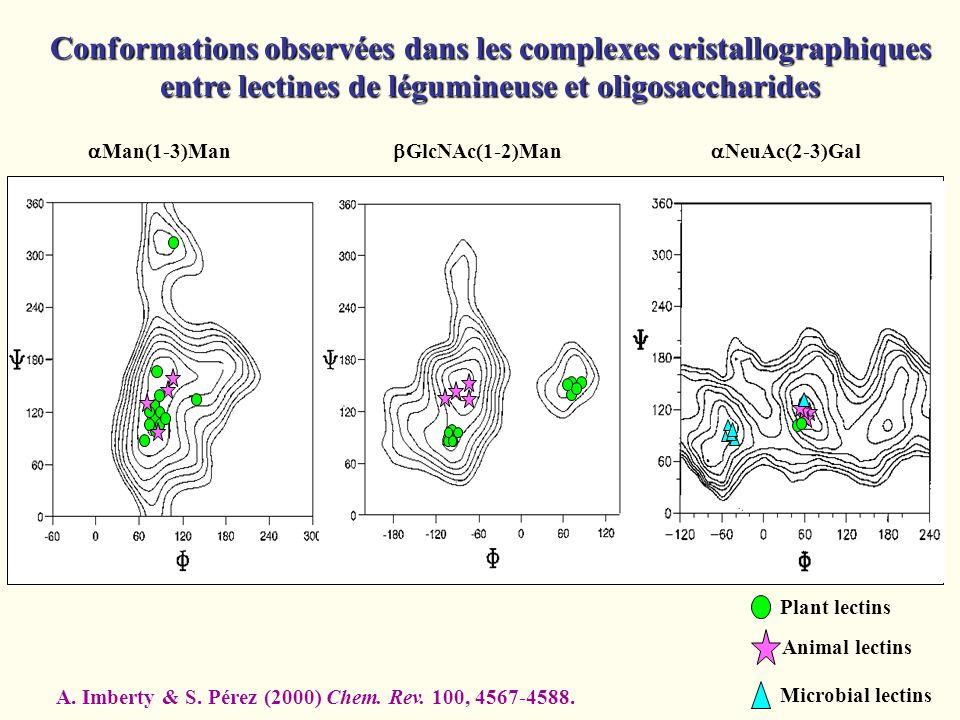Conformations observées dans les complexes cristallographiques entre lectines de légumineuse et oligosaccharides