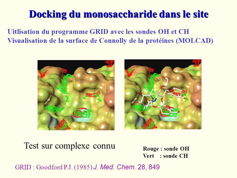 Docking du monosaccharide dans le site