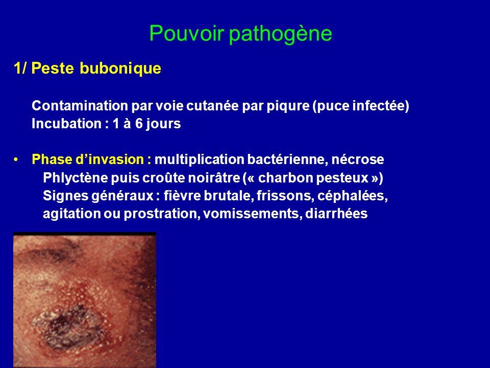 Pouvoir pathogène 1/ Peste bubonique