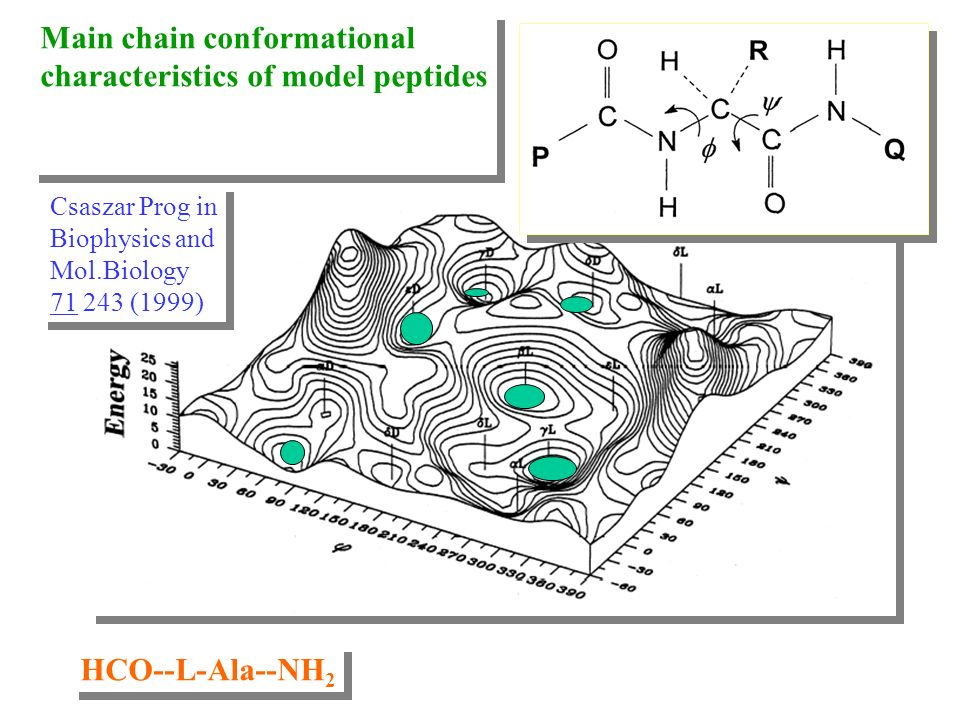 Main chain conformational characteristics of model peptides