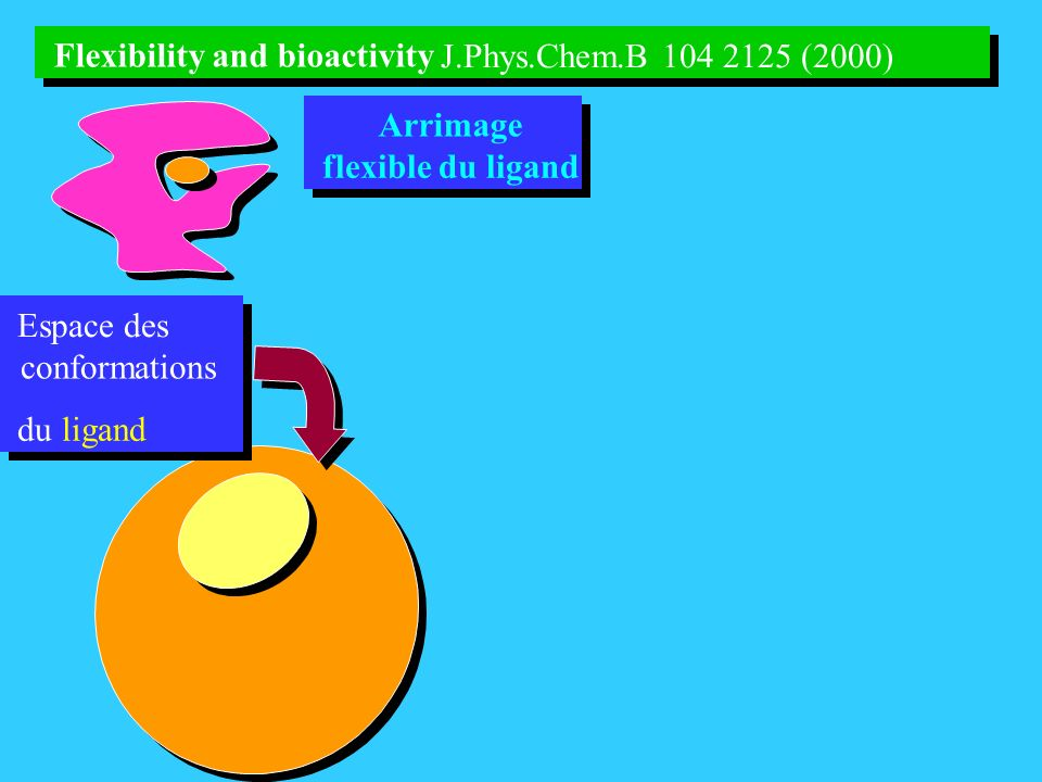 Flexibility and bioactivity Flexibility and bioactivity
