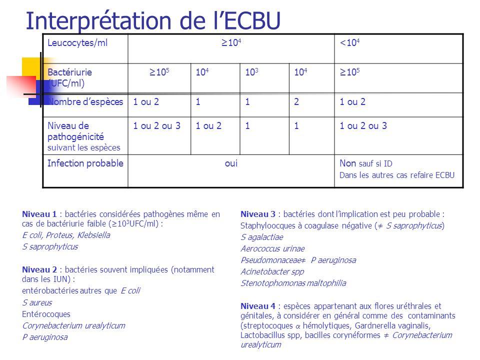 Interprétation de l'ECBU
