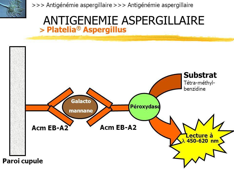 ANTIGENEMIE ASPERGILLAIRE