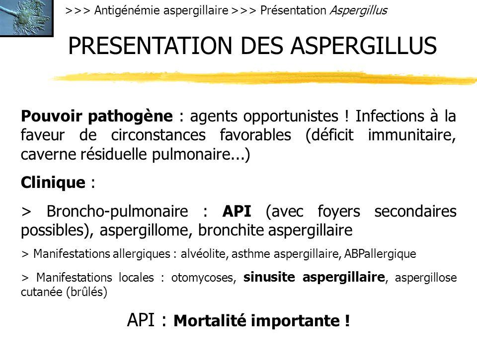 PRESENTATION DES ASPERGILLUS