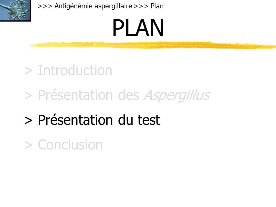 PLAN > Introduction > Présentation des Aspergillus