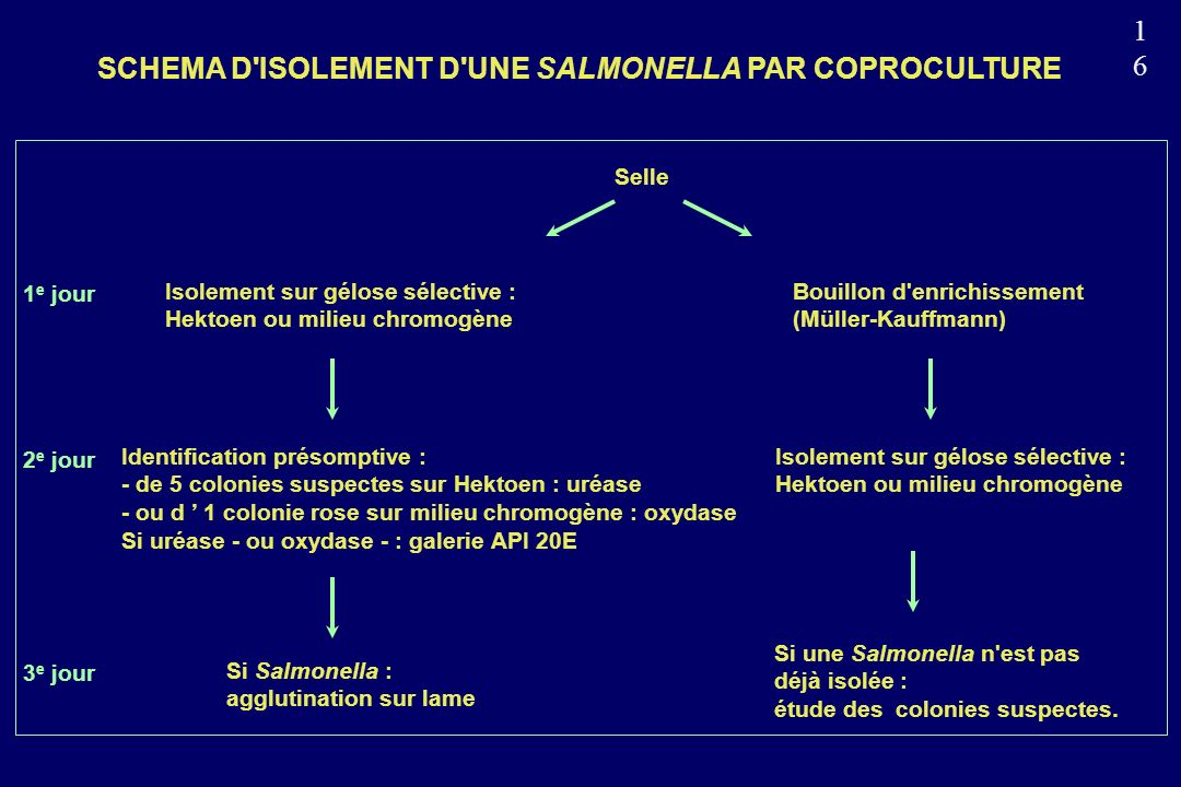 SCHEMA D ISOLEMENT D UNE SALMONELLA PAR COPROCULTURE
