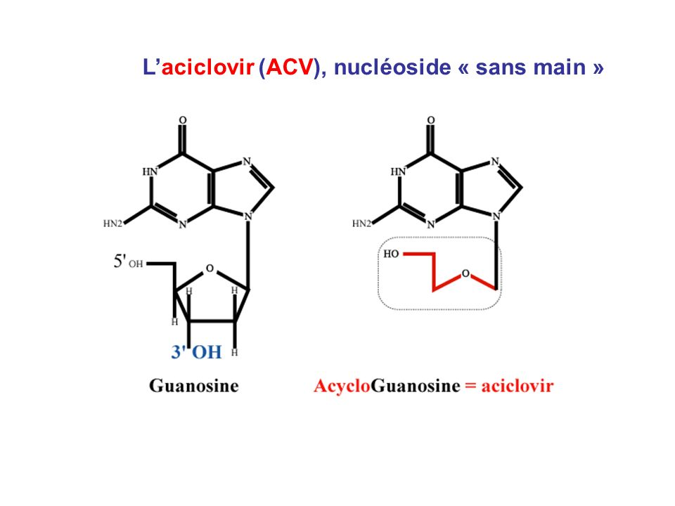 L'aciclovir (ACV), nucléoside « sans main »