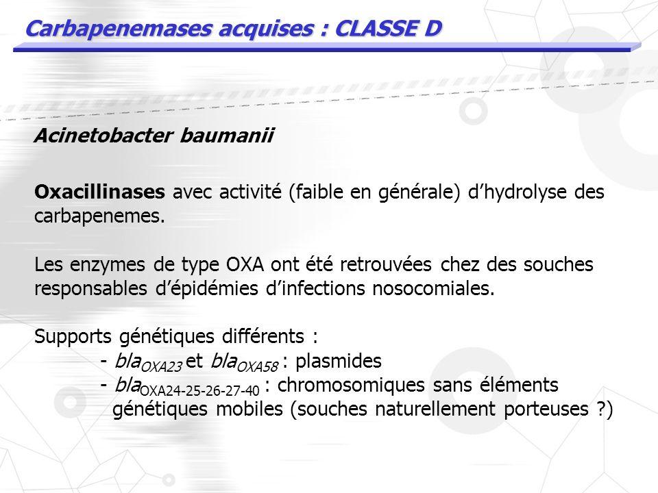 Carbapenemases acquises : CLASSE D