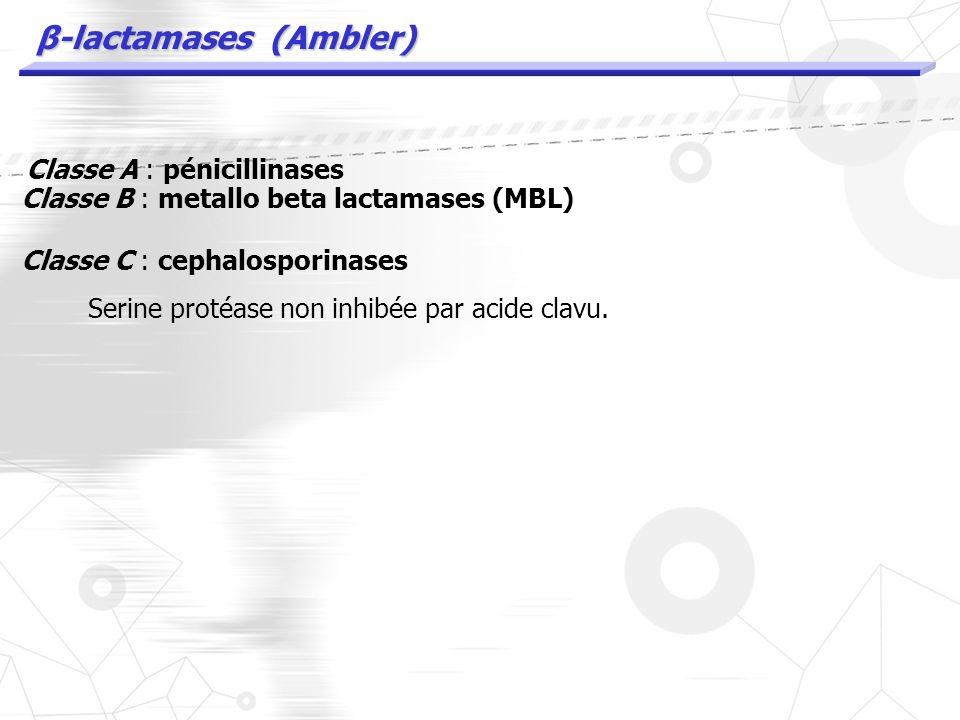 β-lactamases (Ambler)