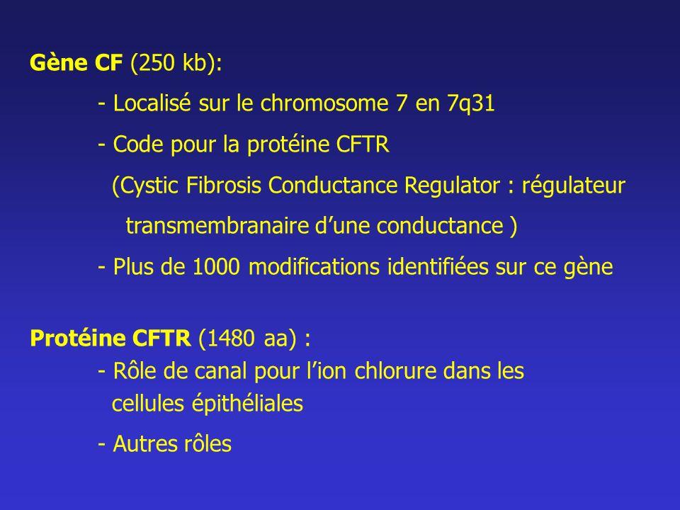 Gène CF (250 kb): - Localisé sur le chromosome 7 en 7q31. - Code pour la protéine CFTR. (Cystic Fibrosis Conductance Regulator : régulateur.