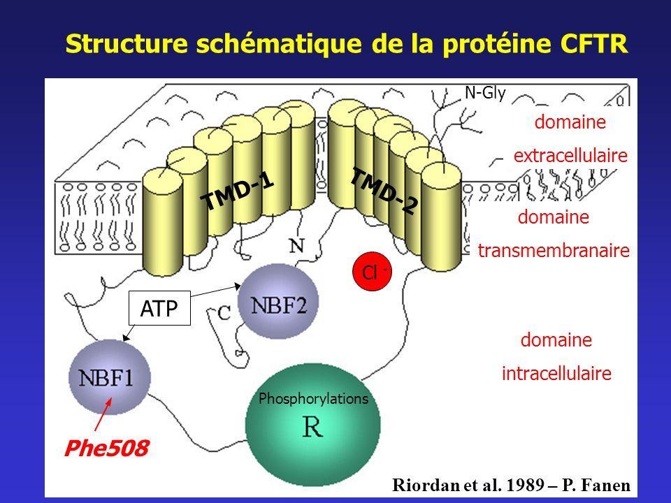 Structure schématique de la protéine CFTR