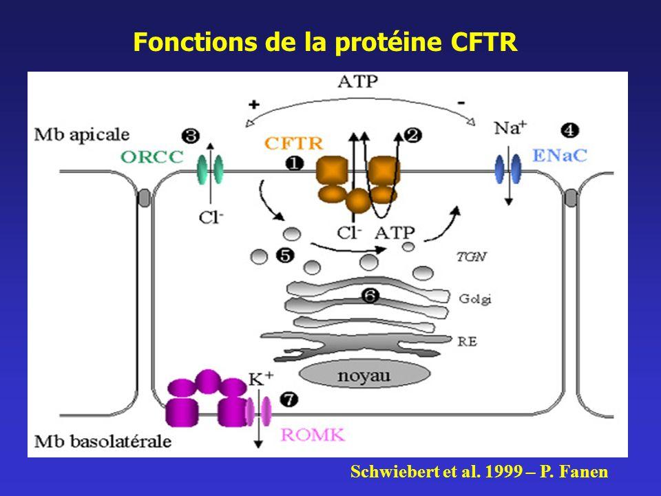 Fonctions de la protéine CFTR Schwiebert et al. 1999 – P. Fanen