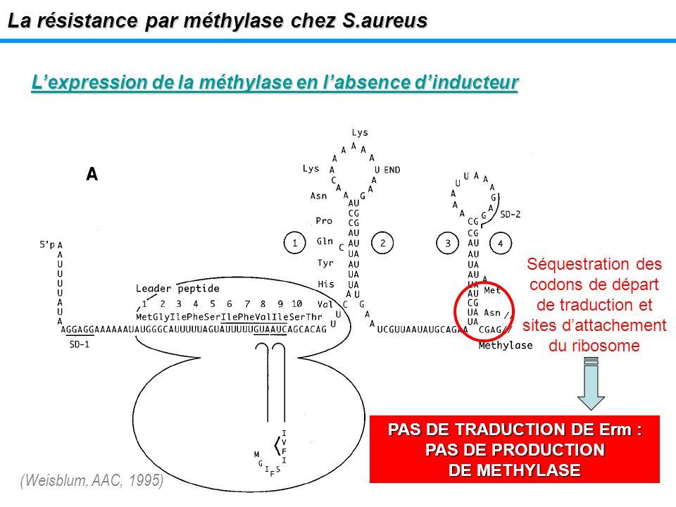 PAS DE TRADUCTION DE Erm : PAS DE PRODUCTION