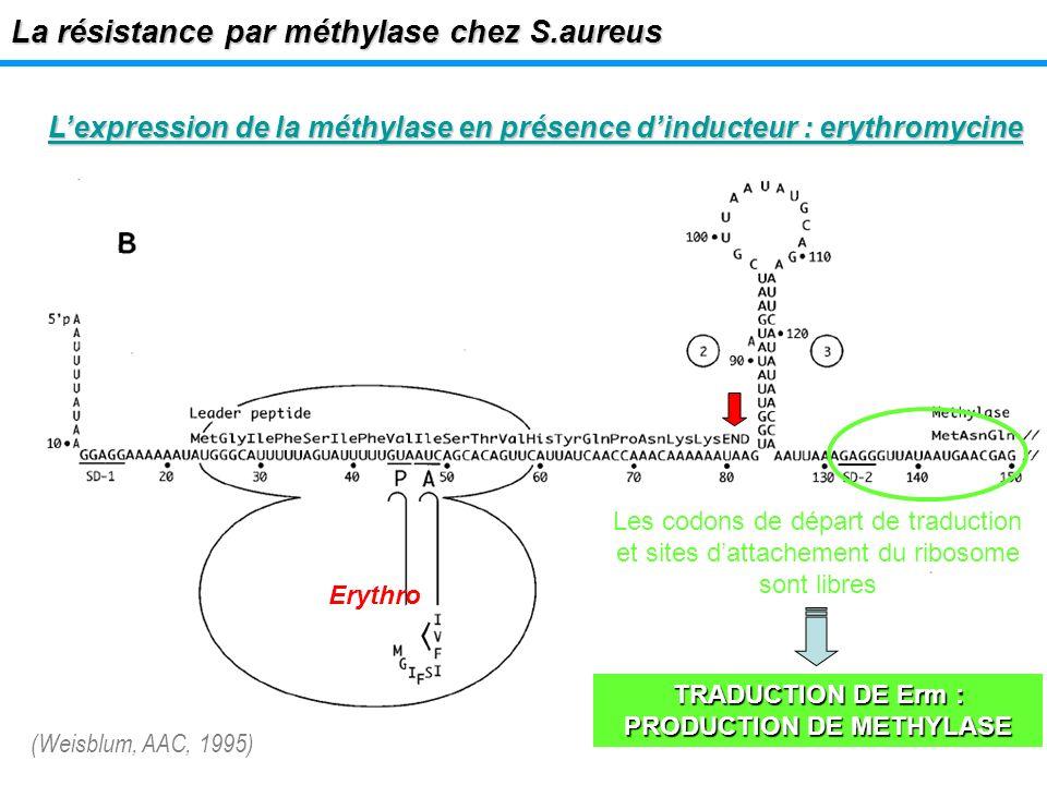 TRADUCTION DE Erm : PRODUCTION DE METHYLASE