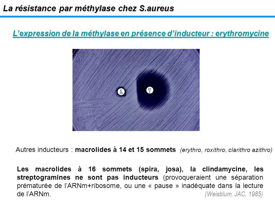 La résistance par méthylase chez S.aureus