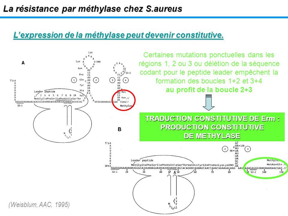 TRADUCTION CONSTITUTIVE DE Erm : PRODUCTION CONSTITUTIVE DE METHYLASE