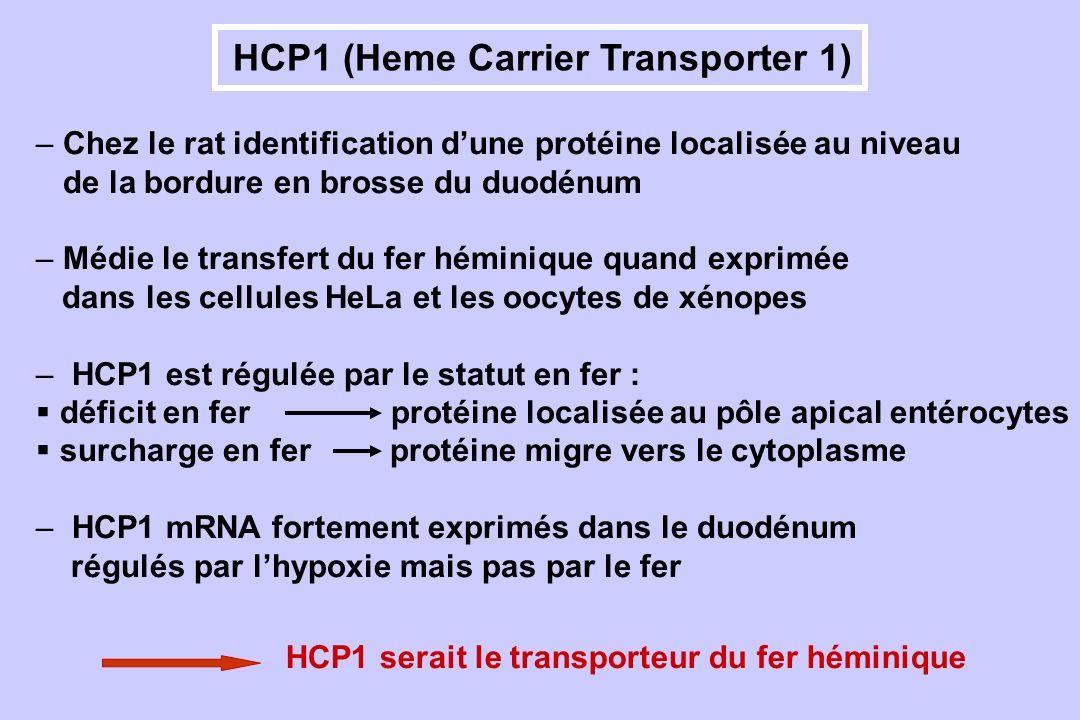 HCP1 (Heme Carrier Transporter 1)