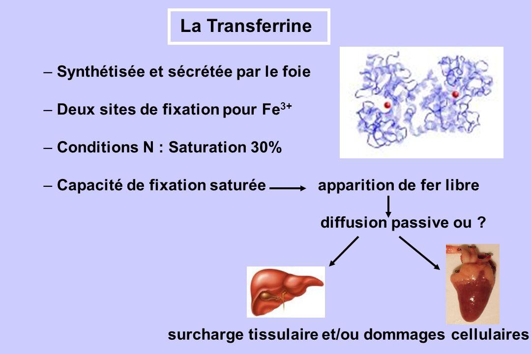 surcharge tissulaire et/ou dommages cellulaires