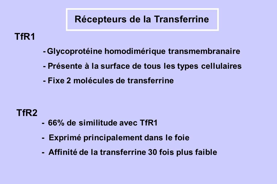 Récepteurs de la Transferrine