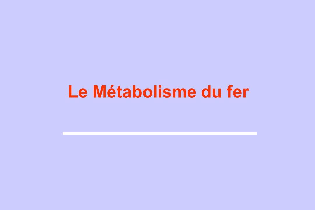 Le Métabolisme du fer