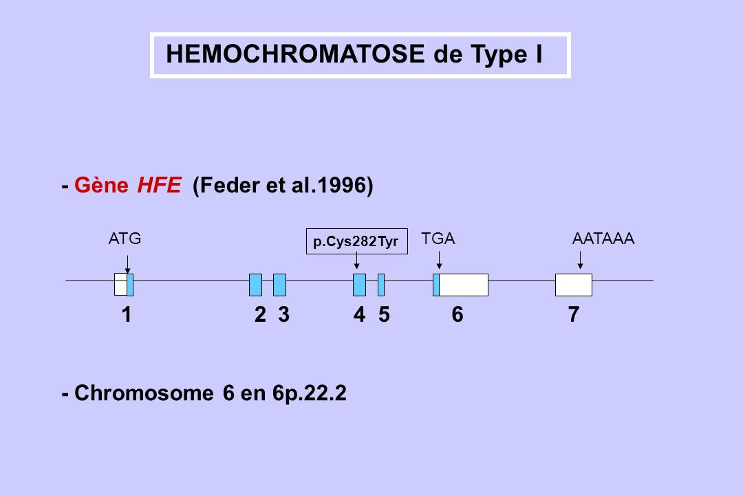 HEMOCHROMATOSE de Type I
