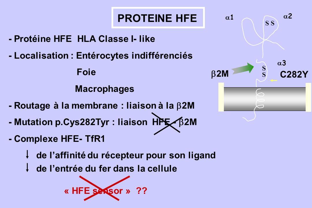 PROTEINE HFE - Protéine HFE HLA Classe I- like