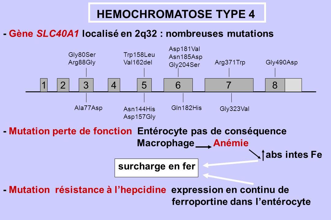 HEMOCHROMATOSE TYPE 4- Gène SLC40A1 localisé en 2q32 : nombreuses mutations. 1. 2. 7. 3. 4. 5. 6. 8.
