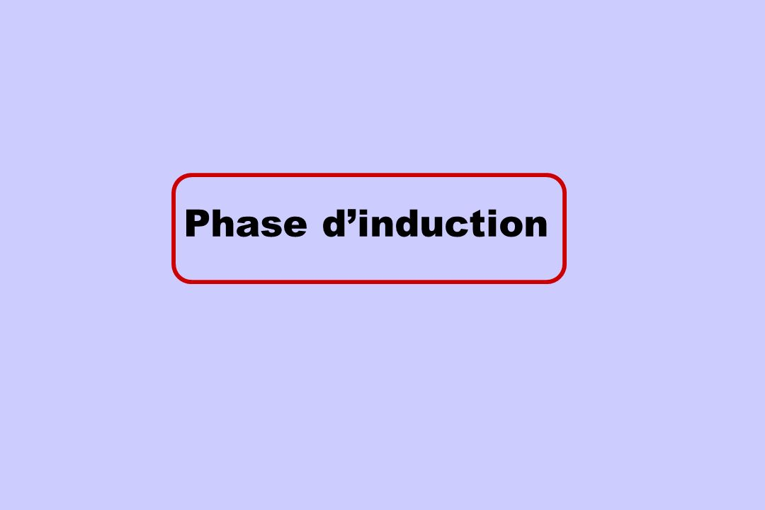 Phase d'induction