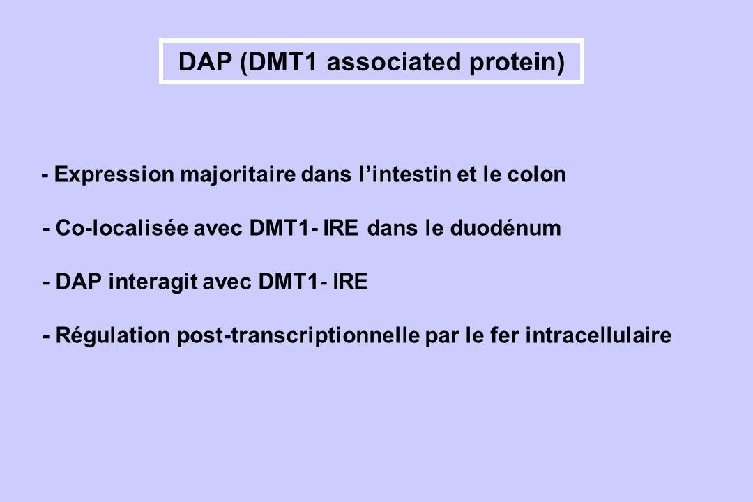 DAP (DMT1 associated protein)