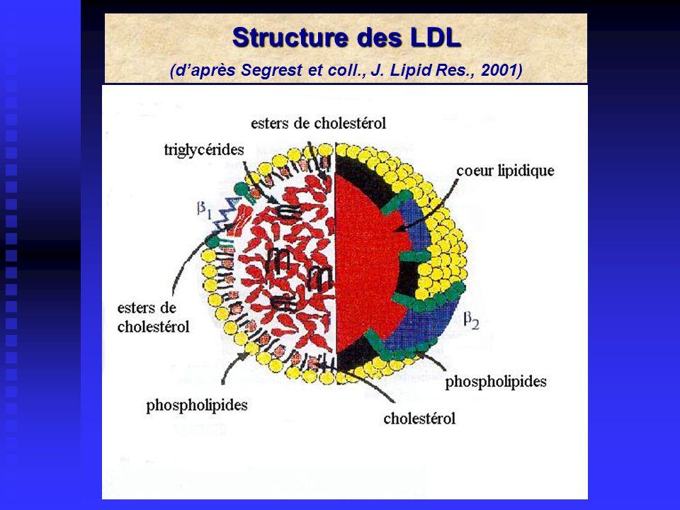 (d'après Segrest et coll., J. Lipid Res., 2001)