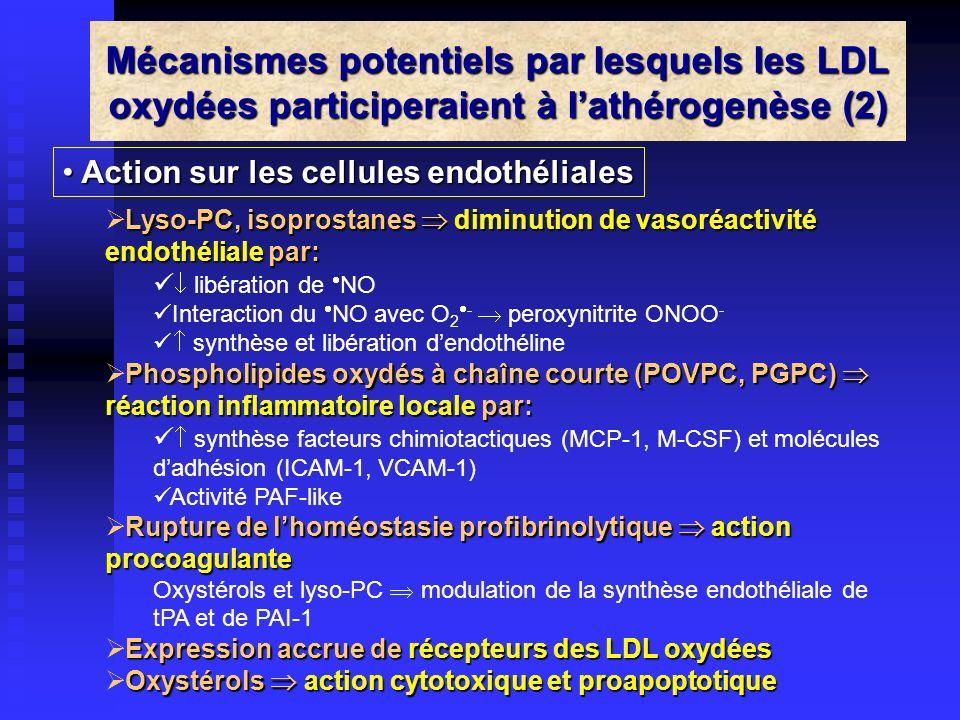 Mécanismes potentiels par lesquels les LDL oxydées participeraient à l'athérogenèse (2)