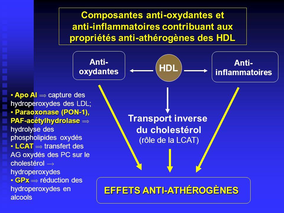 Composantes anti-oxydantes et