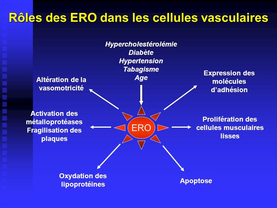 Rôles des ERO dans les cellules vasculaires