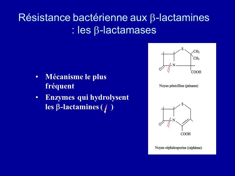 Résistance bactérienne aux b-lactamines : les b-lactamases