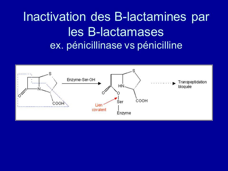 Inactivation des B-lactamines par les B-lactamases ex