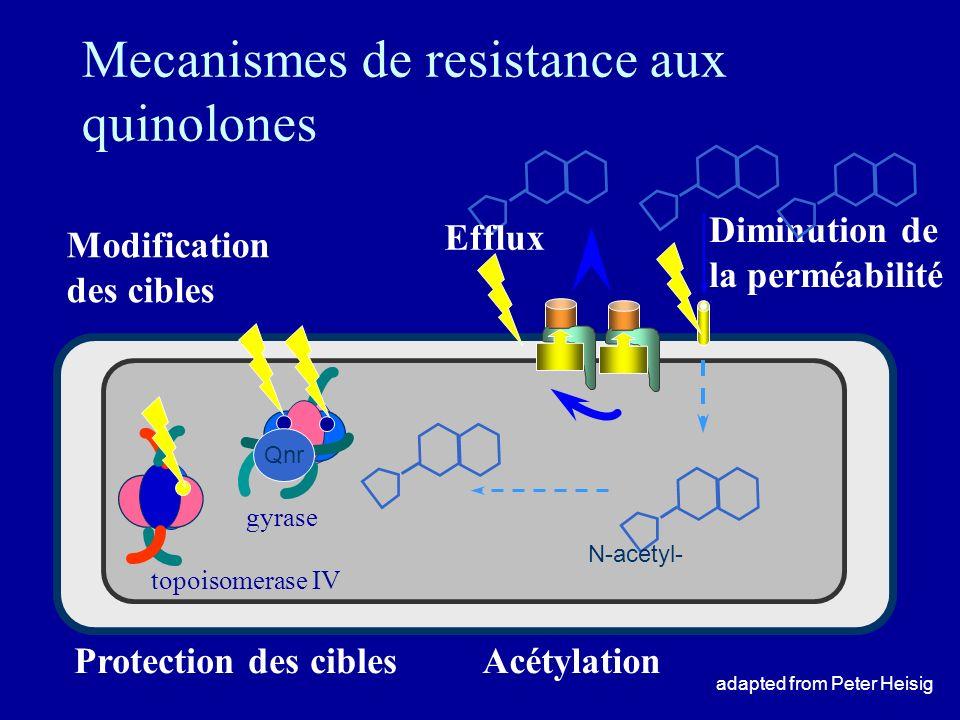 Mecanismes de resistance aux quinolones