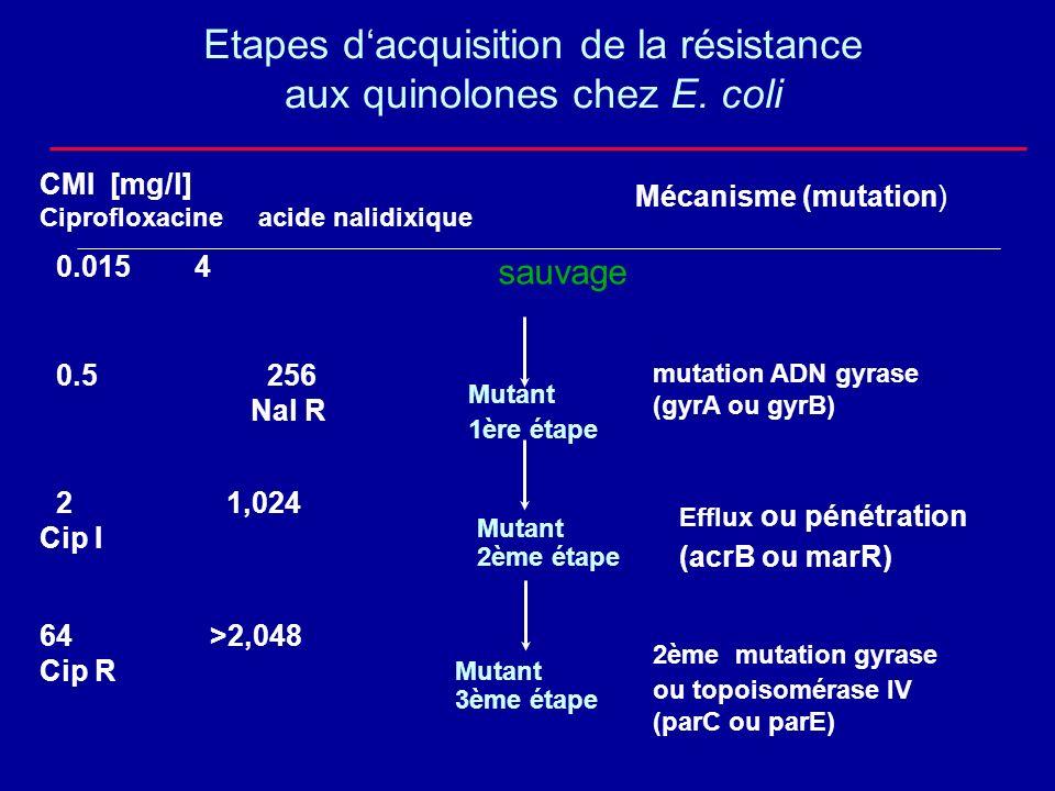 Etapes d'acquisition de la résistance aux quinolones chez E. coli