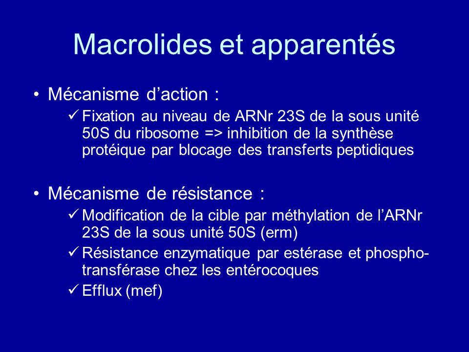 Macrolides et apparentés