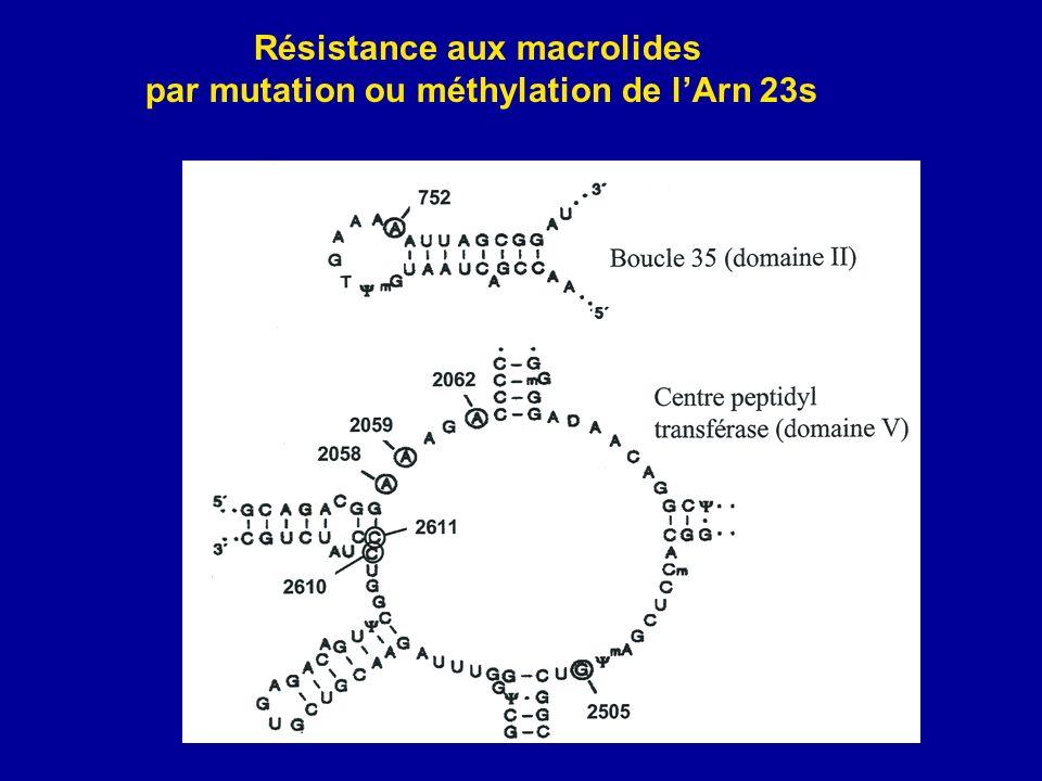 Résistance aux macrolides par mutation ou méthylation de l'Arn 23s