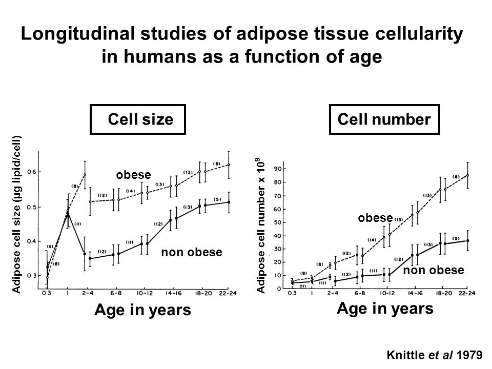 Longitudinal studies of adipose tissue cellularity