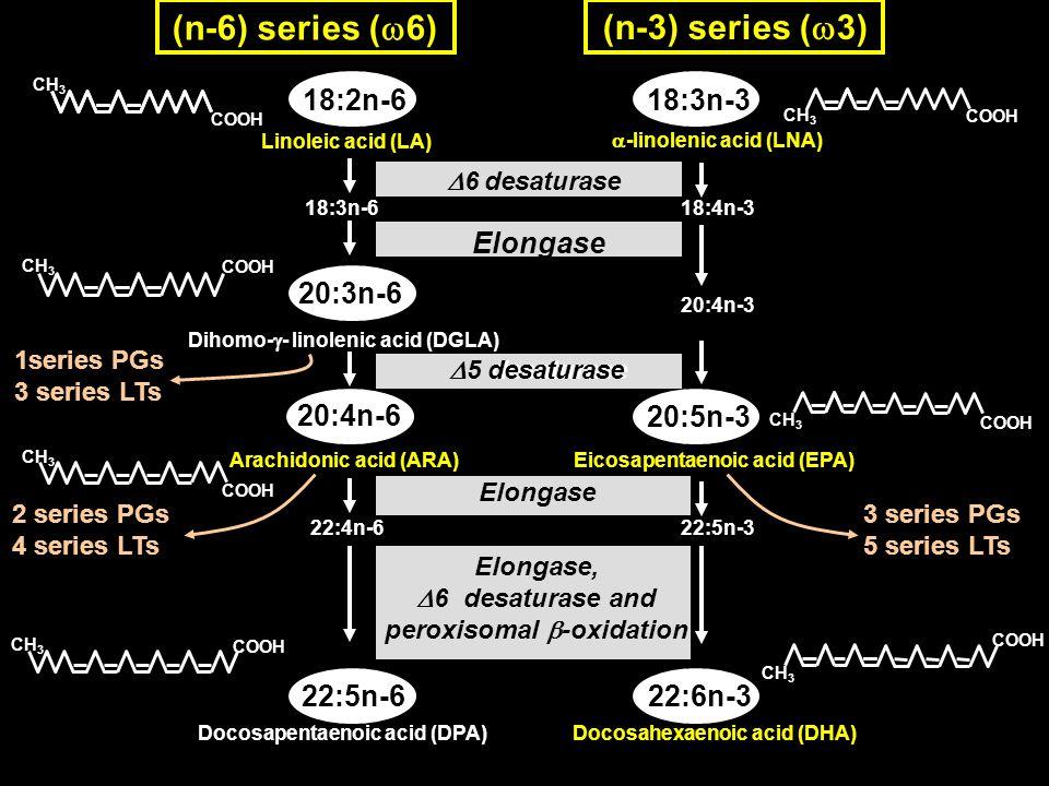 D6 desaturase and peroxisomal b-oxidation