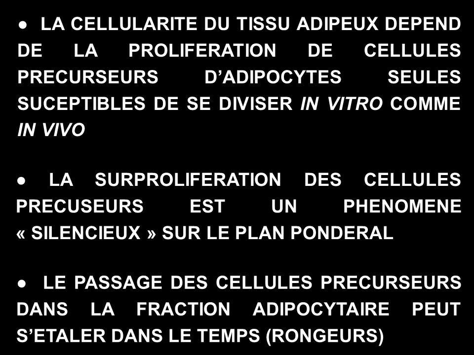 ● LA CELLULARITE DU TISSU ADIPEUX DEPEND DE LA PROLIFERATION DE CELLULES PRECURSEURS D'ADIPOCYTES SEULES SUCEPTIBLES DE SE DIVISER IN VITRO COMME IN VIVO