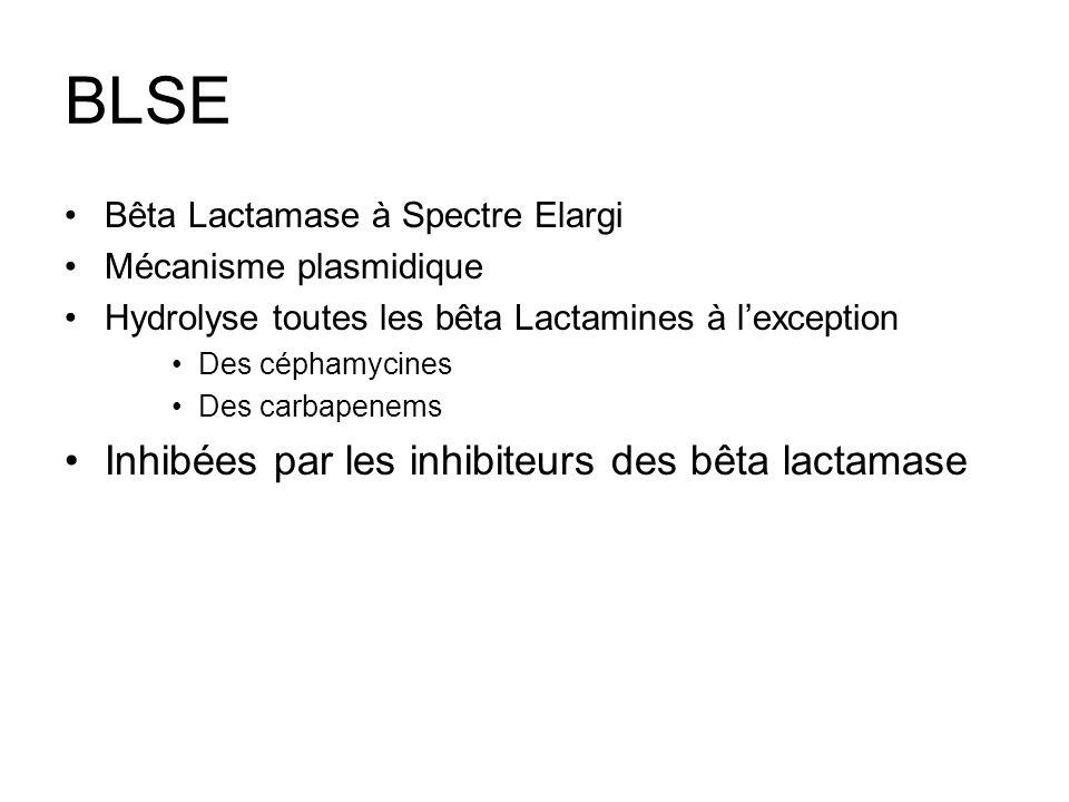 BLSE Inhibées par les inhibiteurs des bêta lactamase
