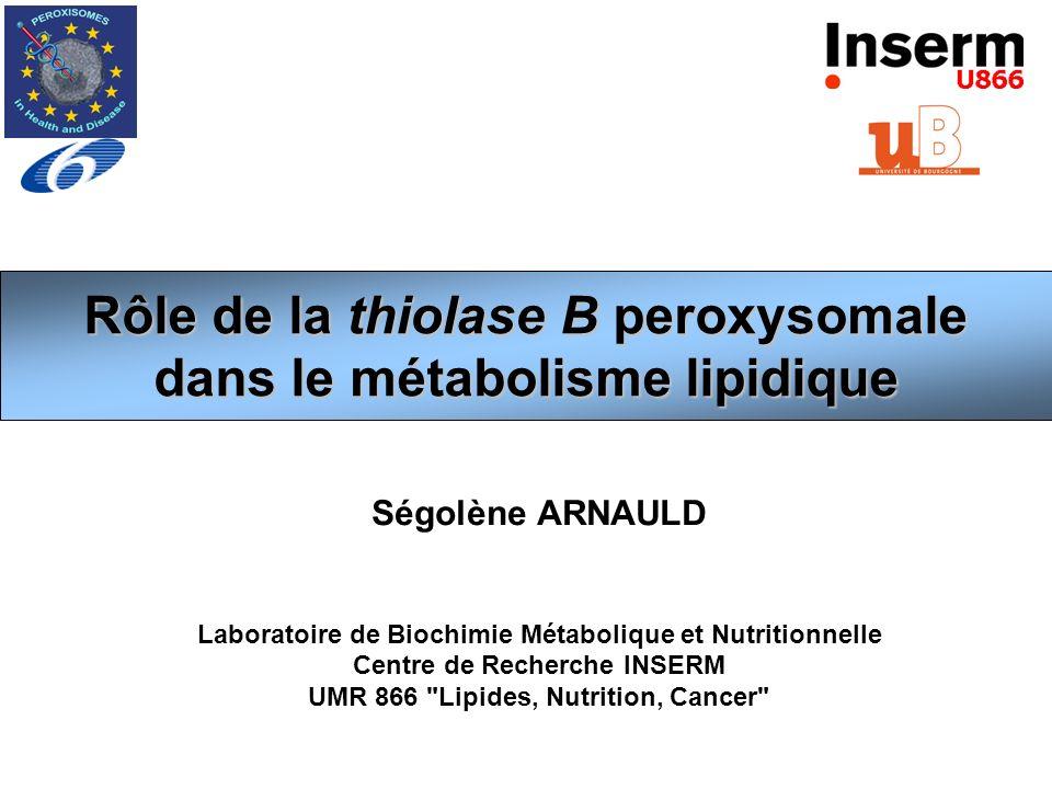 Rôle de la thiolase B peroxysomale dans le métabolisme lipidique
