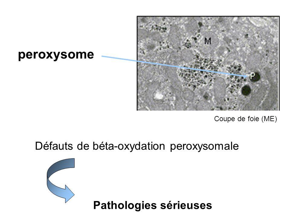 peroxysome Défauts de béta-oxydation peroxysomale