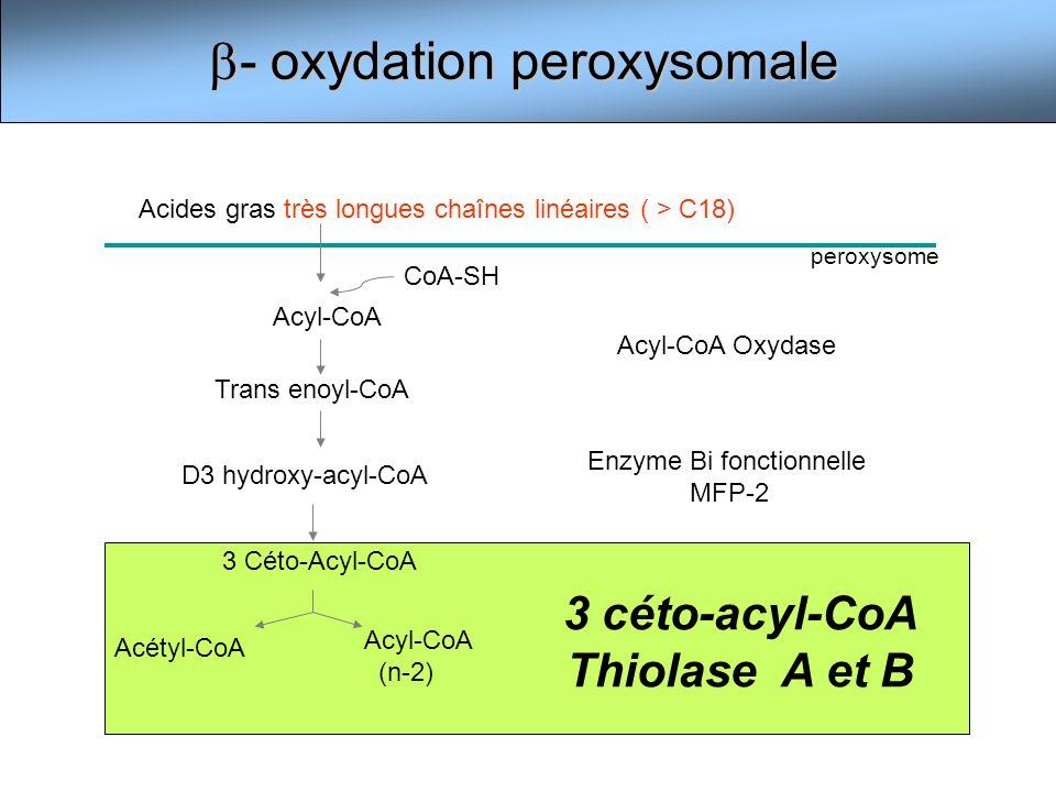 3 céto-acyl-CoA Thiolase A et B